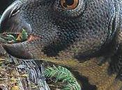 Dinosaurios Australia