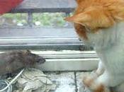 Amigo ratón gato...
