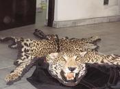 Pumas jaguares, victimas genocidio