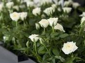 cajón flores