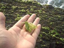 Barreras producción algas fines energéticos.