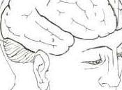Notas sobre hemisferios cerebrales.