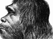 extinción Neandertales podría haber sido culpa Homo sapiens