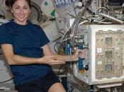 Seis ratones 'astronautas' para estudiar pérdida masa ósea