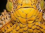 serpiente descubierta principio 2012 (Matilda)