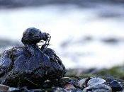 Derrame crudo Golfo México