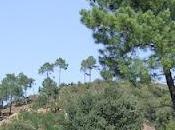 Conociendo Flora Sierras Occidentales