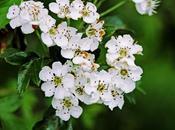 Pequeñas flores blancas hacen formas