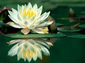 """Curso """"salud integral espiritualidad. aportaciones para salud integral"""""""