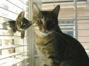 Madre hijo posando para foto Gato ratón frente