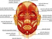 Face: ejercita músculos rostro