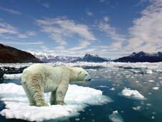Salvando hogar osos polares