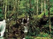 Amazonas, ejemplo preservación
