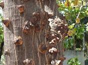 mira cámara: árbol