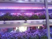 Floriade 2012 Expo Holanda abruma técnica para Horticultura