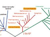 Evolución prebiótica origen vida III: LUCA árbol