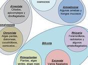 Clasificación filogenia Eucariotas