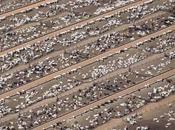 "Argumento: vegetarianismo/veganismo asesina animales campos cultivo"""