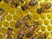 Alergia abejas avispas