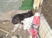 Punk, cachorro rescatado medio muerto zona chabolista. (sevilla)