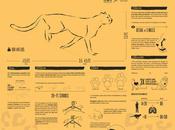 guepardos: máquinas correr naturaleza