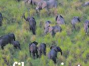 China alienta matanza predecentes elefantes