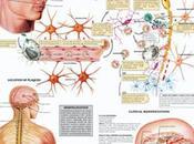 Debate sobre futuro Esclerosis Múltiple