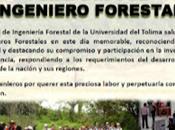 Ingeniero Forestal