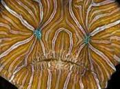 Anuncian especies nuevas 2010 Inter...