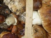 mejores zonas para recoger setas España: Turismo micológico