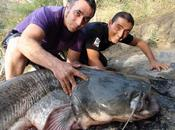 Salidas para pescar siluros