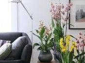 Plantas Octubre, Cambrias