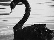 cisnes negros suerte determinarán futuro negocio