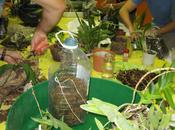 Seminario Iniciación Cultivo Orquídeas