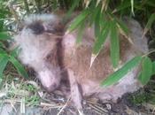 Otra horror vuelve repetirse, ayuda urgente para este pobre!!