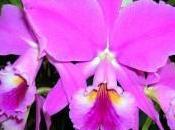 Orquídeas Guayana... peligro crítico (artículo canal azul)
