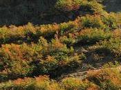 ¿Les hablé otoño Bariloche?