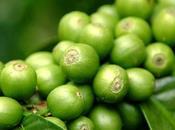 maravilloso café verde
