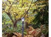Consejos para jardín (OTOÑO)