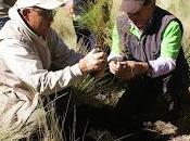 Reforestemos México manera conjunta siembran arboles principales bosques País