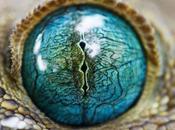 Ojos reptiles