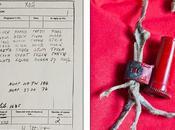 Encuentran esqueleto paloma mensajera Guerra Mundial mensaje intacto