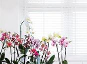 Decora eventos viviendas orquídeas