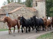 Feria Caballo Pernía