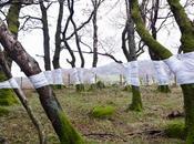 Árboles alineados- tree line