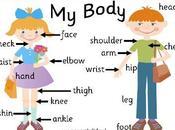 Partes cuerpo humano inglés