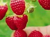 Cetonas frambuesa pérdida peso beneficios efectos secundarios
