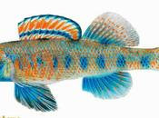 Descubren nuevas especies peces: Roosevelt, Carter, Clinton, Gore Obama