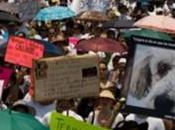 Manifestación Mexico contra maltrato animal.