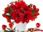 Flores Amarilis, alternativa Flor Pascua